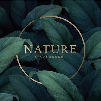 Tło natura