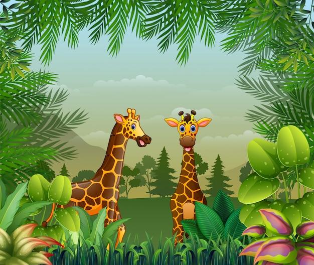 Tło o tematyce dżungli z żyrafami