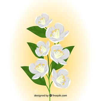 Tło pięknych białych kwiatów