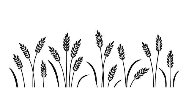 Tło pola jęczmienia pszenicy dla owsa