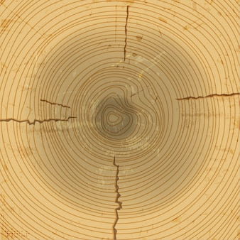 Tło przekrój drewna