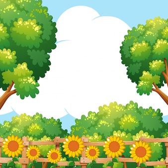 Tło scena z słonecznikami w ogródzie