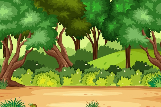 Tło scena z wiele drzewami w lesie