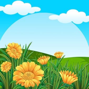 Tło scena z żółtymi kwiatami w polu