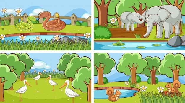 Tło sceny dzikich zwierząt
