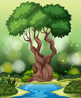 Tło tropikalny las deszczowy