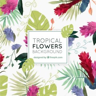 Tło tropikalnych kwiatów akwarela