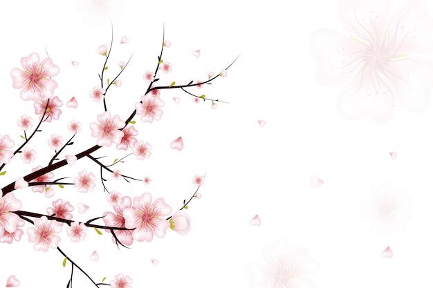 Tło wiosna. ilustracja gałąź kwitną wiosną z różowe kwiaty, pąki, spadające płatki. realistyczne na białym tle. kwitnąca gałązka wiśni.