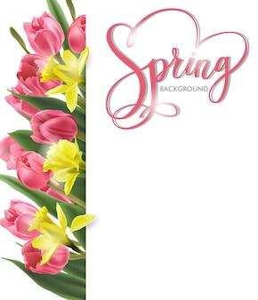 Tło wiosna z kwitnących wiosennych kwiatów różowe tulipany narcissus spring concept