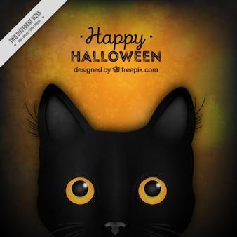 Tło z czarnym kotem na halloween