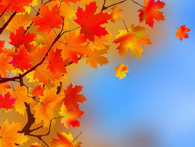 Tło z liści jesienią.