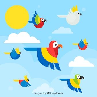 Tło z płaskie latające papugi
