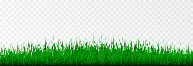Trawa trawa trawnik młoda trawa png