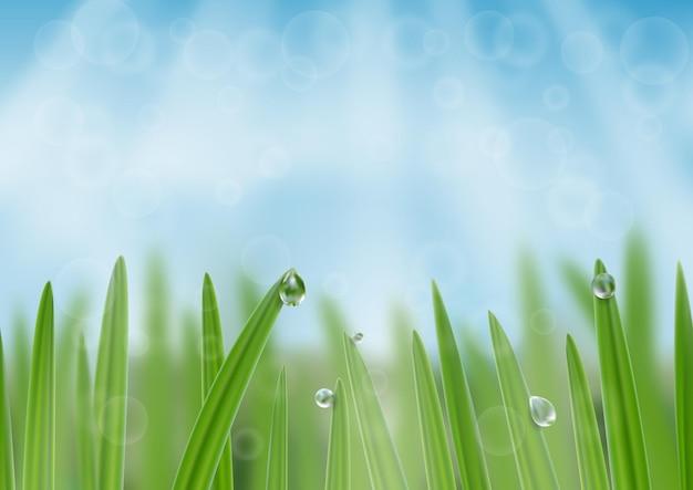 Trawa w kropelkach wody w tle świeży baner internetowy natury