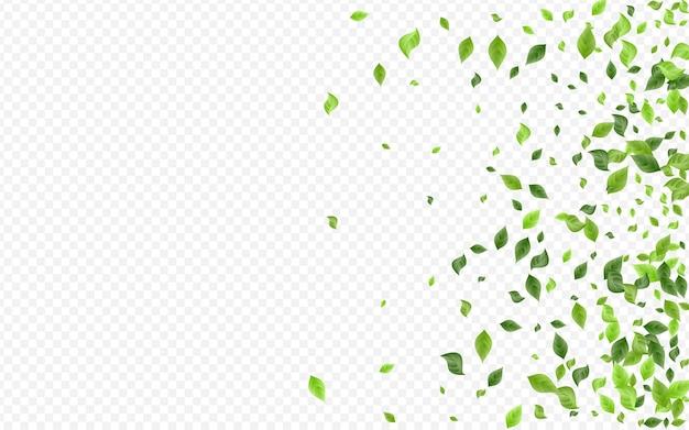 Trawiaste liście ziołowe. blur foliage design.