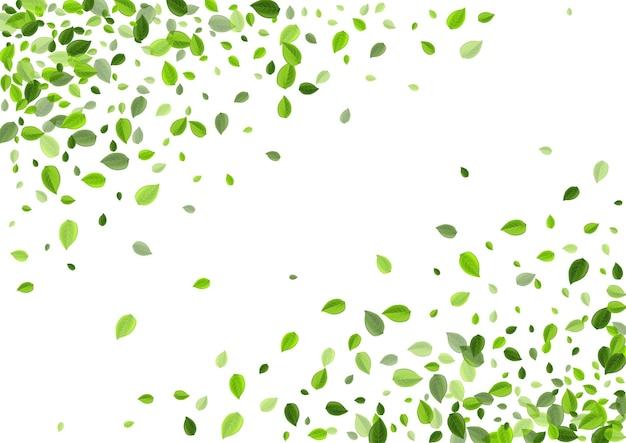 Trawiaste liście ziołowe koncepcja. tapeta fly greens. ilustracja herbaty liści bagien. baner wiatru liści.