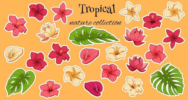 Tropikalna kolekcja z egzotycznymi kwiatami i rzeźbionymi liśćmi w stylu cartoon. ilustracja wektorowa do projektowania na białym tle.