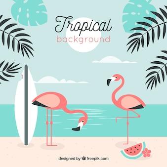 Tropikalna plaża tło