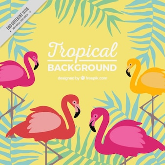Tropikalna tła z flamingów i liści