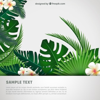 Tropikalna tła