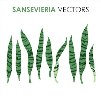 Tropikalne egzotyczne drzewo sansevieria pozostawia płaskie ilustracje na lato