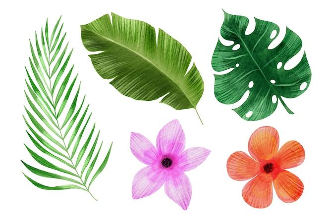 Tropikalne kwiaty i kolekcja liści