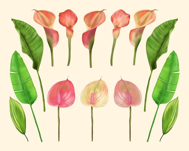 Tropikalne kwiaty i liście. lilie сalla i anturium