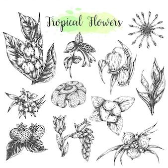 Tropikalne kwiaty i liście na białym tle ręcznie rysowane elementy. zestaw botaniczny. kolekcja kwiatowa ilustracji wektorowych styl vintage