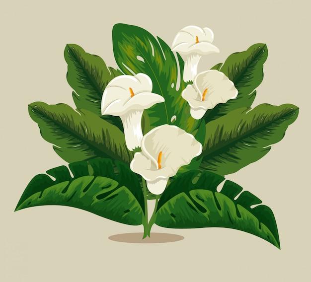 Tropikalne kwiaty rośliny z egzotycznymi liśćmi