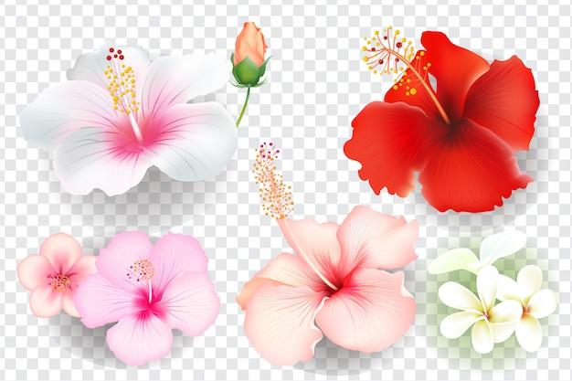 Tropikalne kwiaty ustawione na białym tle