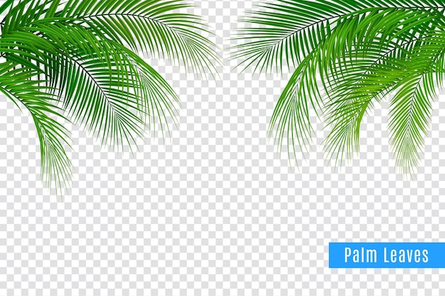 Tropikalne liście gałązki palmowej realistyczna kompozycja ramy z przezroczystym tłem i skupiskami liści z tekstem