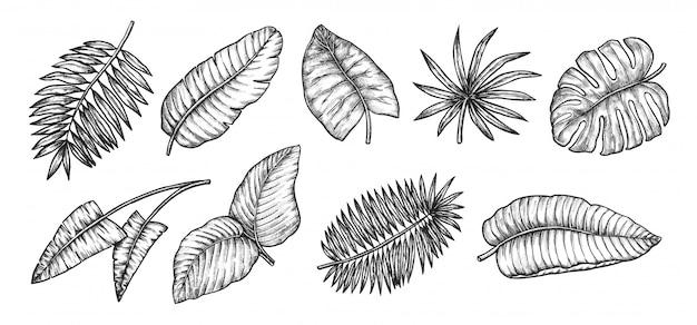 Tropikalne liście. kolekcja ikon egzotycznych liści palmowych. ilustracja botaniczna tropikalnych roślin dżungli