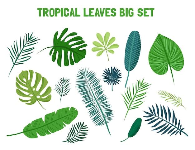 Tropikalne liście palmy. na białym tle.