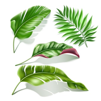 Tropikalne liście realistyczne zestaw ilustracji