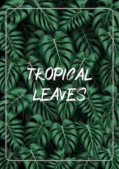 Tropikalne liście tło z roślinami dżungli