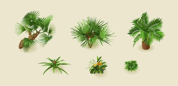 Tropikalne palmy na białym tle zestaw