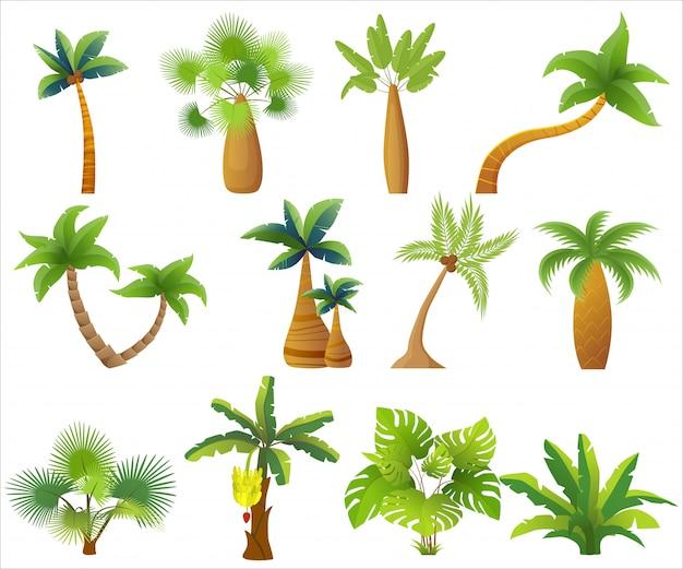 Tropikalne palmy na białym tle.