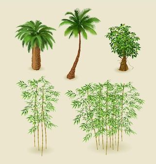 Tropikalne rośliny i bambus na białym tle zestaw