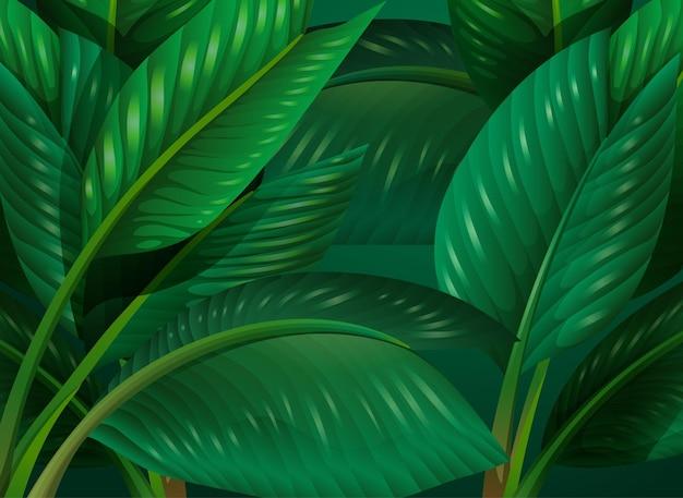 Tropikalne zielone liście w tle