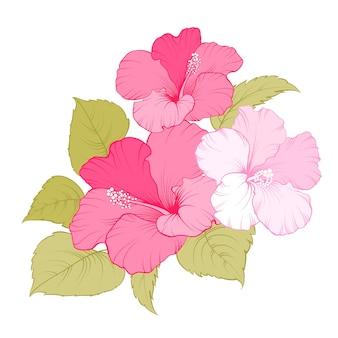 Tropikalny kwiat hibiskusa