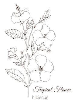 Tropikalny kwiat na białym tle