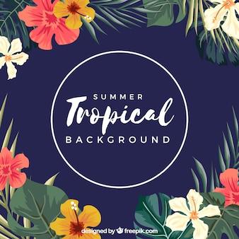 Tropikalny lato tło z kwiatami różni kolory