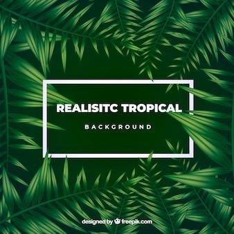 Tropikalny liści tło