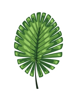 Tropikalny streszczenie zielone liście na białym tle.