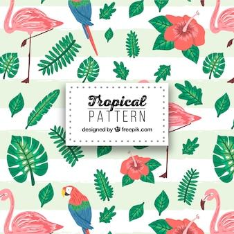 Tropikalny wzór z roślinami i ptakami