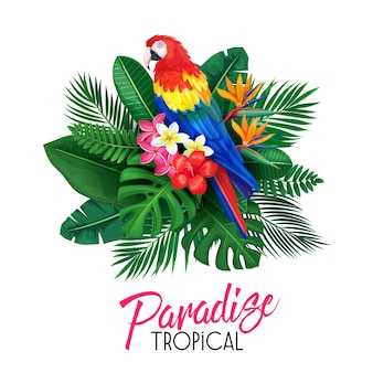 Tropikalny z tukanem