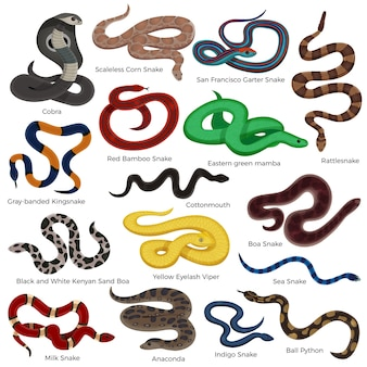 Trujący wąż kolorowe ozdobne ikony zestaw z opisem typów gadów na białym tle na białym tle kreskówki
