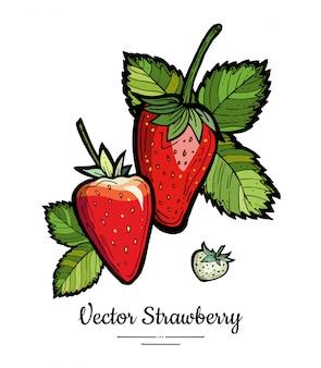 Truskawkowa ilustracja odizolowywa na bielu