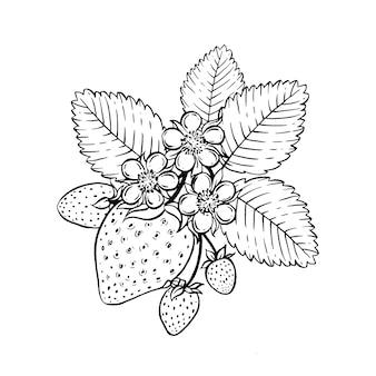 Truskawkowa ręka rysująca ilustracja.