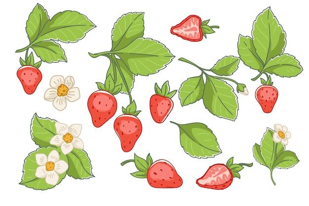 Truskawkowe dojrzałe jagody i kwiaty w rozkwicie wektora